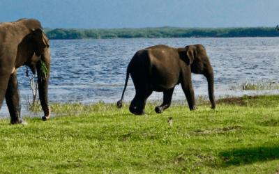 Wild Life Safari